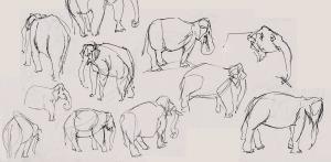 emma_pennington_elephants